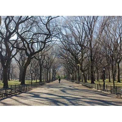 G7000-Central-Park_36x48