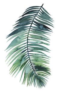 155797D-Untethered-Palm-VIII